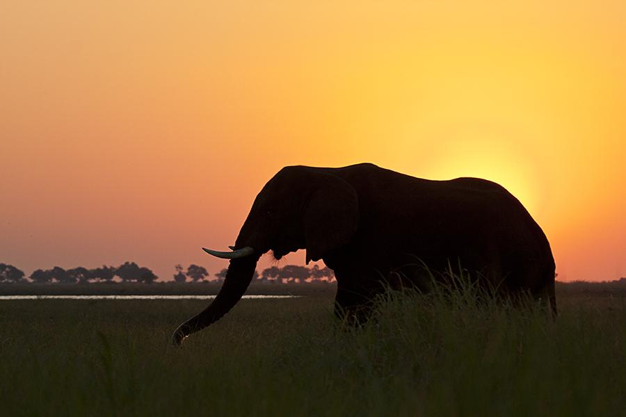 Chobe Marsh Sunset