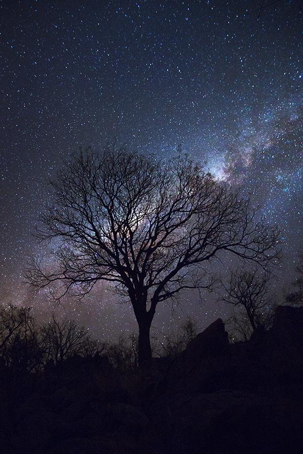 Alpac Nights
