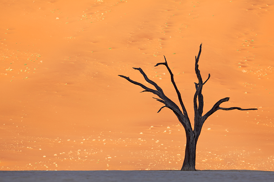 Orange Deadvlei