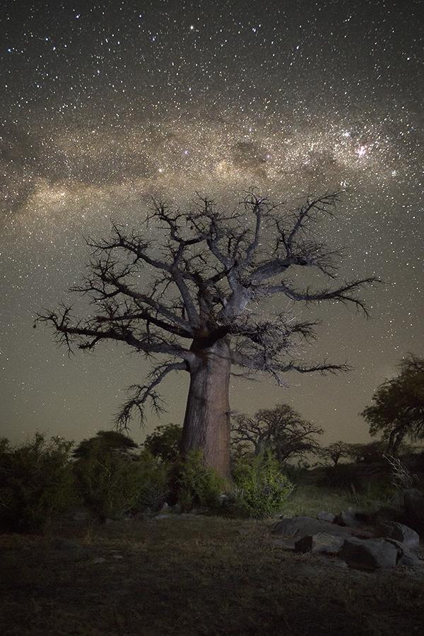 Branching Baobab