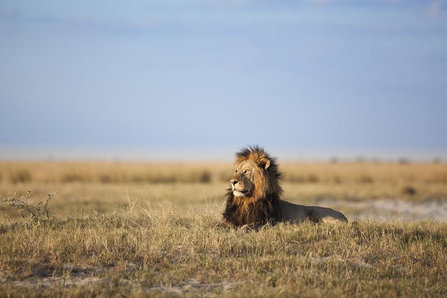 Chobe King