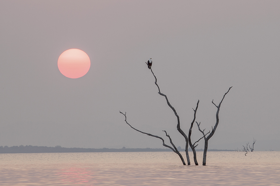 Fish Eagle Sunrise
