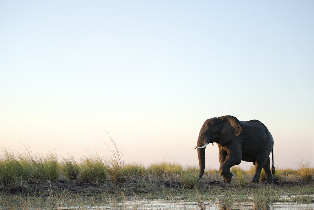 Stroll along the Chobe