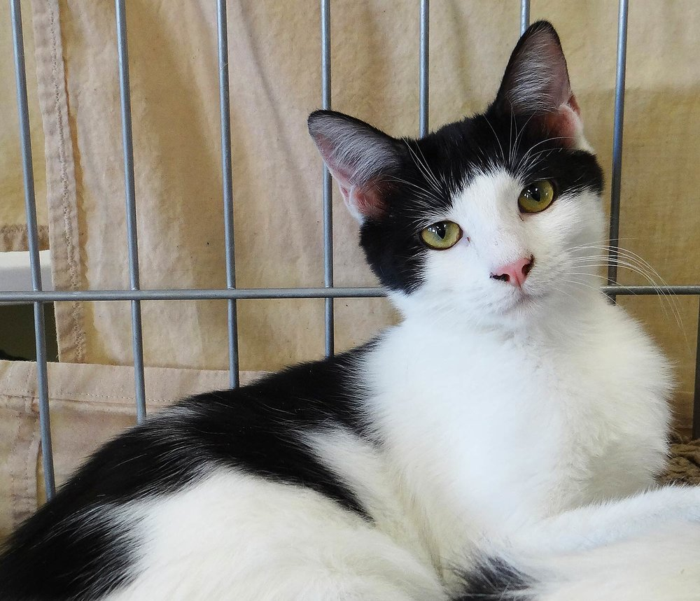 Cats & Kittens — AnimalSave