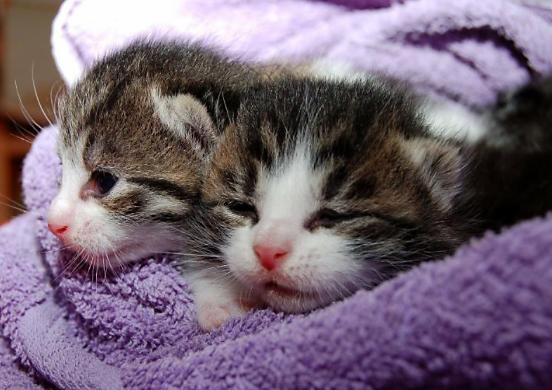 kittensWeb.jpg