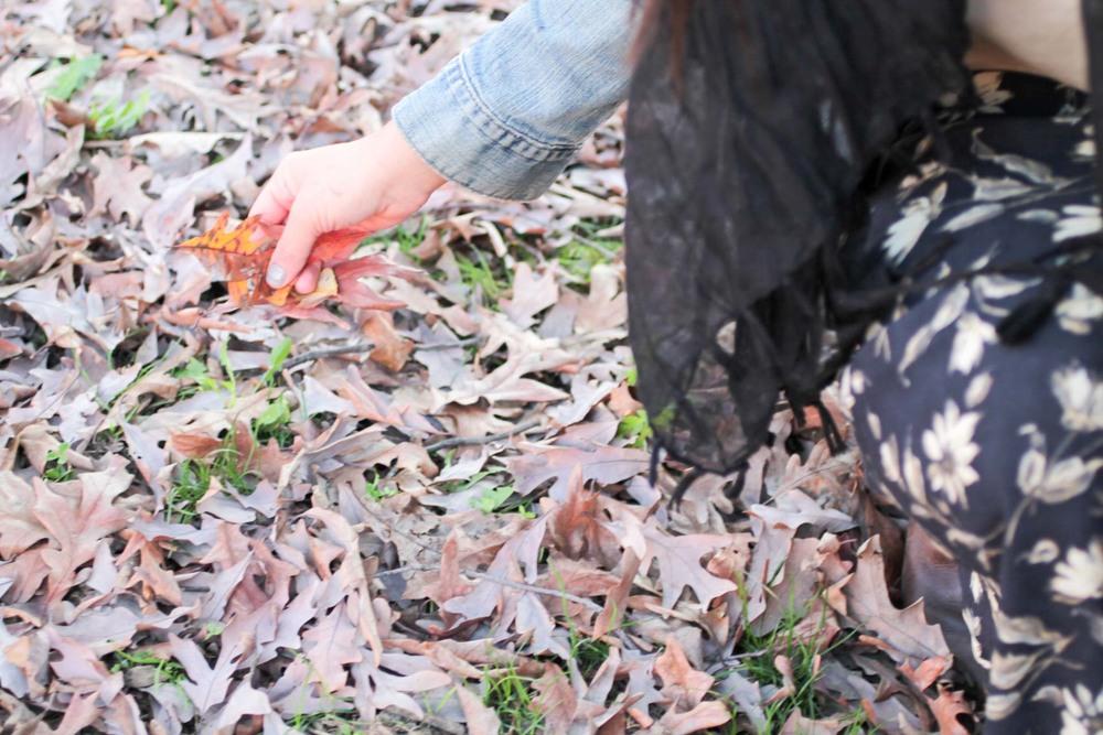 leaves-malcom-x-meridian-hill-park