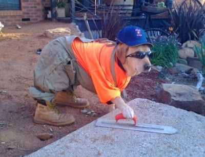 Halloween-dog-costume