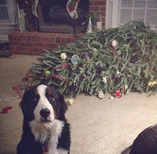 Christmas-funny-puppy
