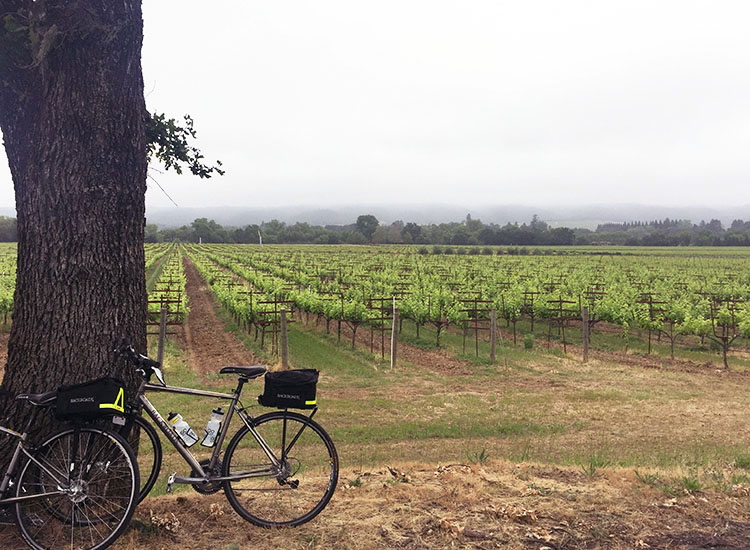 BackroadsWineCountry_BikeVineyards.jpg
