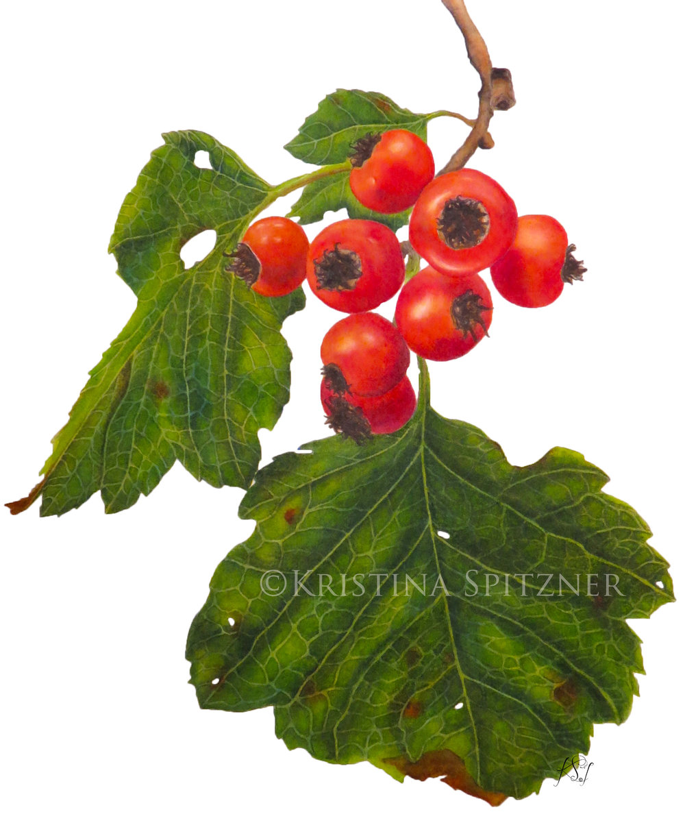 christmasberries2.jpg