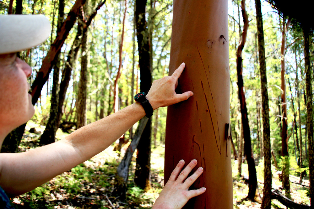 Karen notices a couple claw marks on a madrone tree in the forestland above the farm.