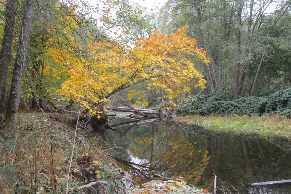 Since 2003, SOLC has owned and cared for this peaceful 30-acre floodplain forest near the town of Williams.