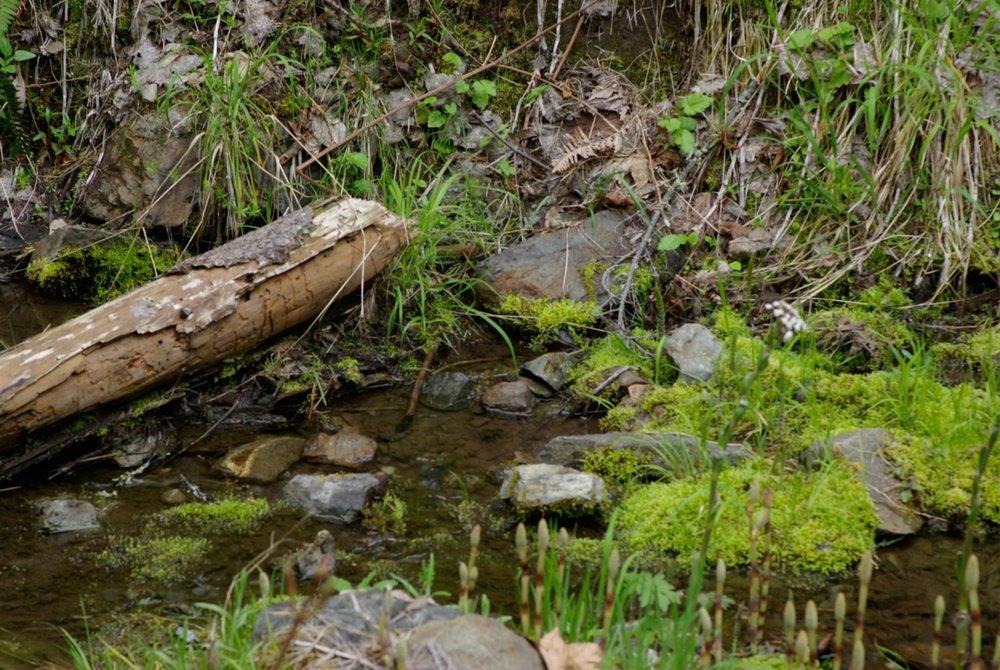 Sardine Creek