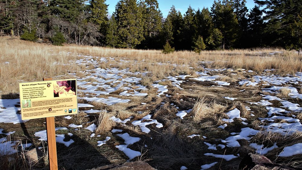 Mardon skipper recovery area in the Cascade-Siskiyou National Monument. Photo by Crystal Nichols.