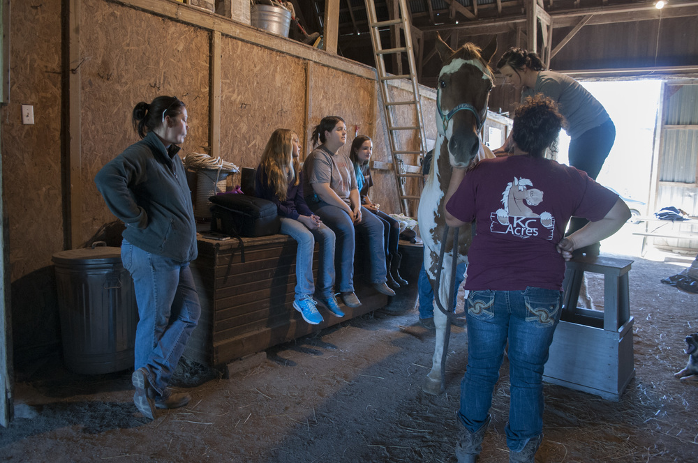 From left to right, Tammy Tiedtke, Peyton Tiedtke, Julia Litmer, Kailey Dean, and Corey Richardson watch as chiropractor Deanna Milhoan checks Wildfire's spine. Wildfire needed his pelvis realigned after competing in a showmanship race with Dean on Sept. 23, 2014.