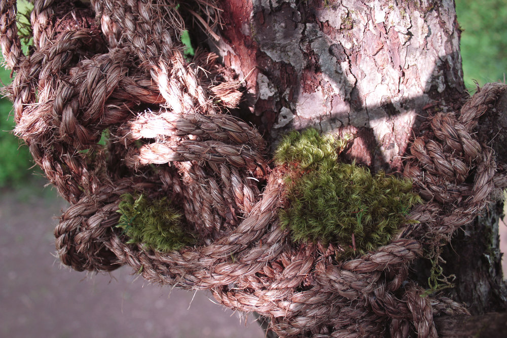 closeup_1.jpg