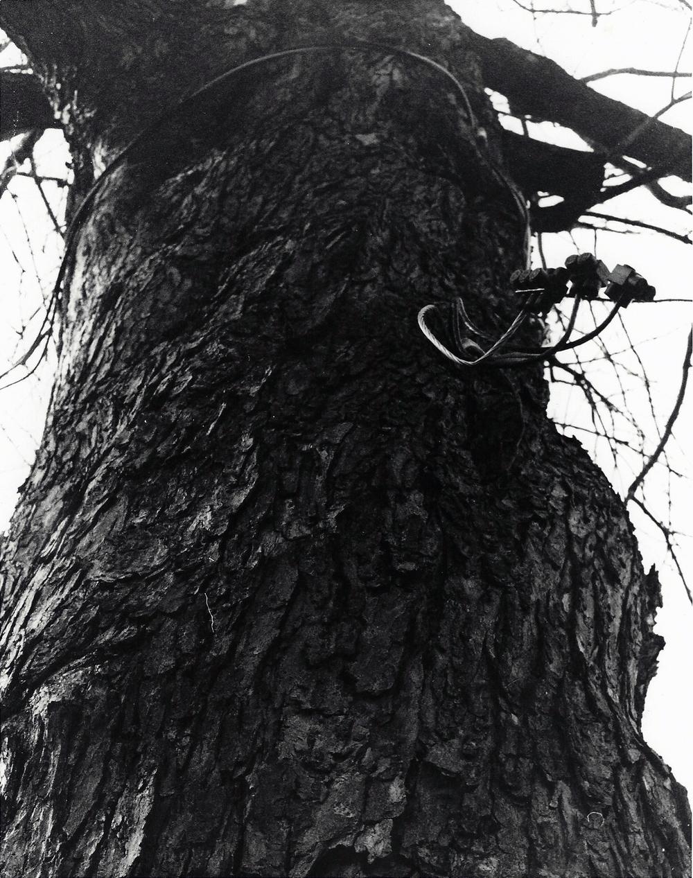 2012P Tree 2.jpg