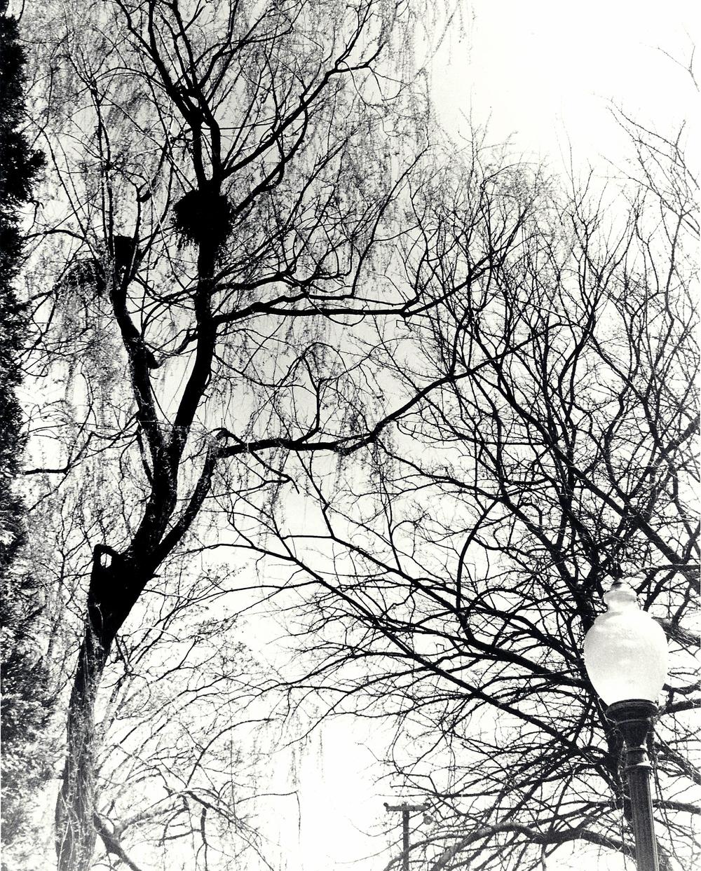 2012P Bird's Nest.jpg