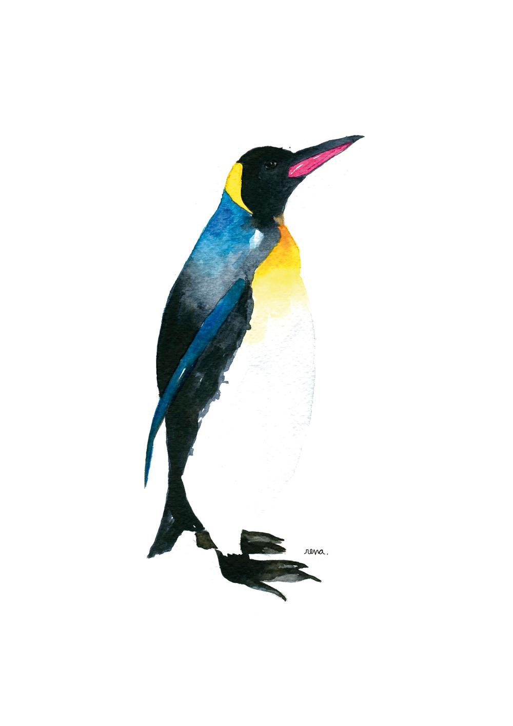 pinguino_web.jpg