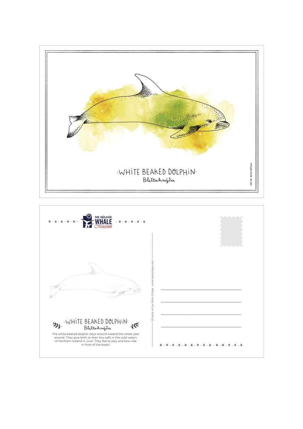 postcard_dolphin.jpg