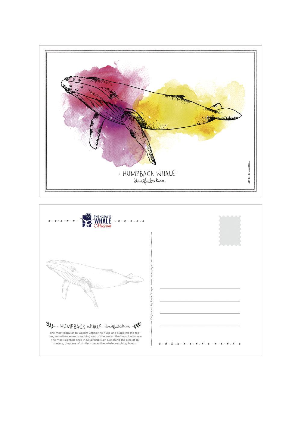 postcard_humpback.jpg