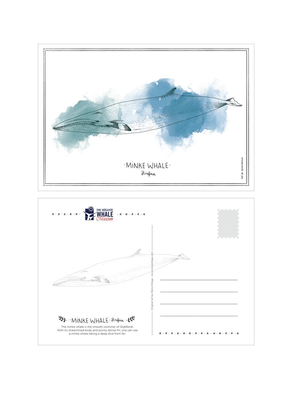 postcard_minke.jpg