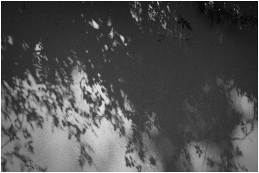 Sombras y jazmín / Shadows and jasmine
