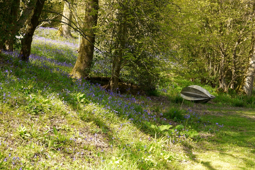 'Seed Pods' Robert harding with bluebells.jpg