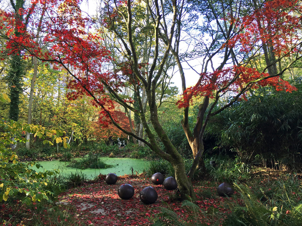 Oriental pond in autumn with 'Vitality' by Hannah Bennett