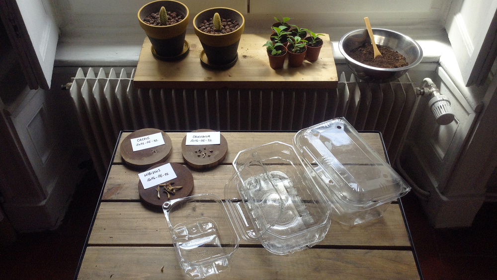 #FridayTips : Homemade greenhouse x Seeding