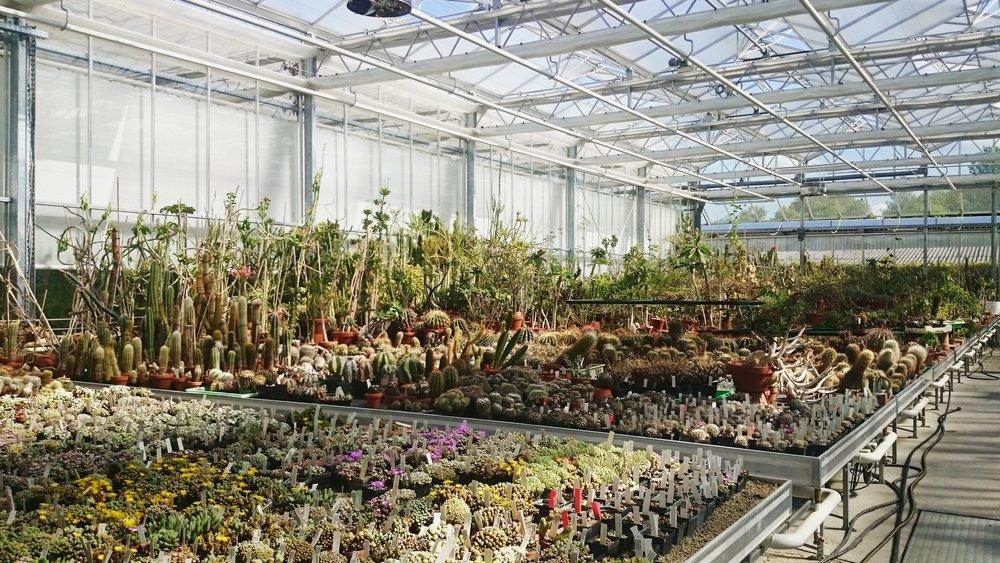 La nurserie des succulentes, Jardin botanique de Munich / Succulents nursery, Munich Botanical Garden