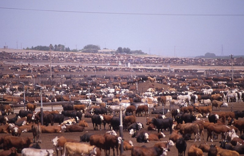To get this amount of cattle, you need far, far more land.