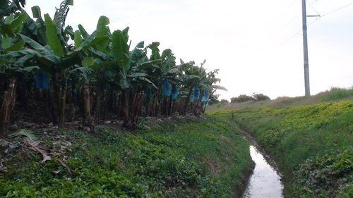 Rainforest Alliance plantation 'protecting' local waterways