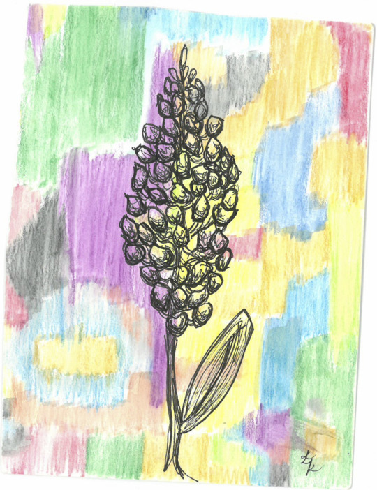 orientalist botanic_2.jpg