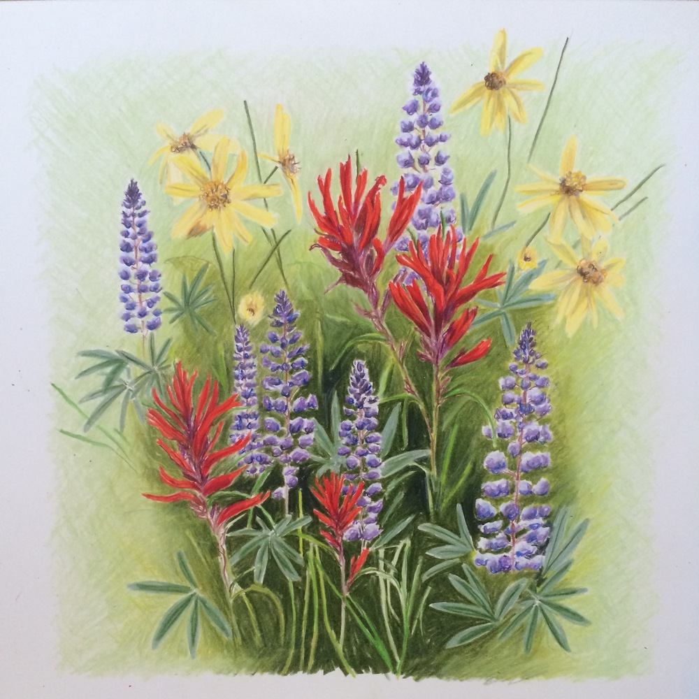Wasatch Wildflowers | Colored Pencil on Bristol Paper