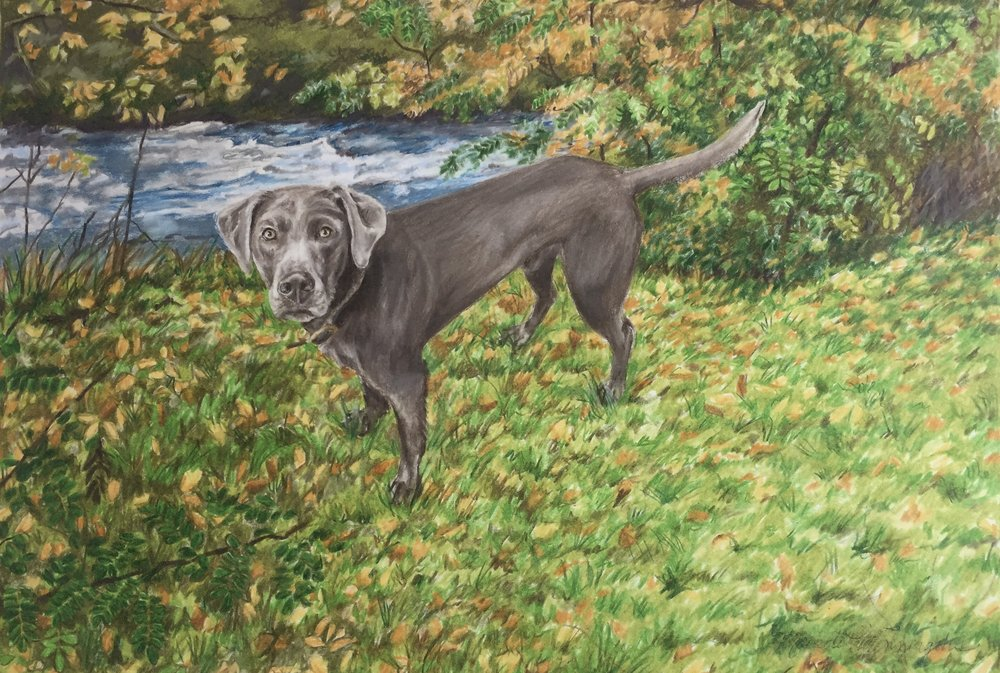 Timber in the Fall | Colored Pencil on Bristol Paper