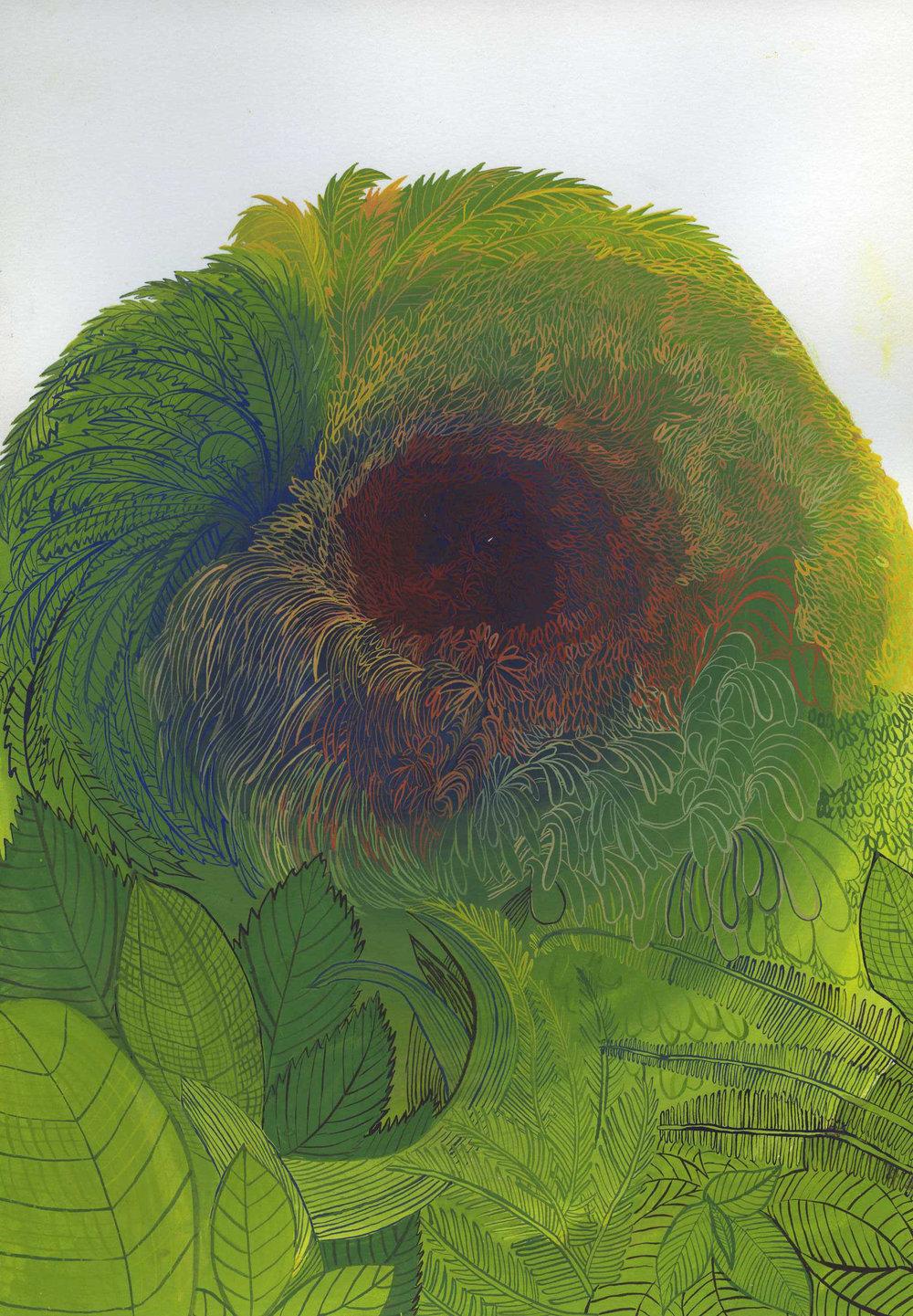 selva 2-1.jpg