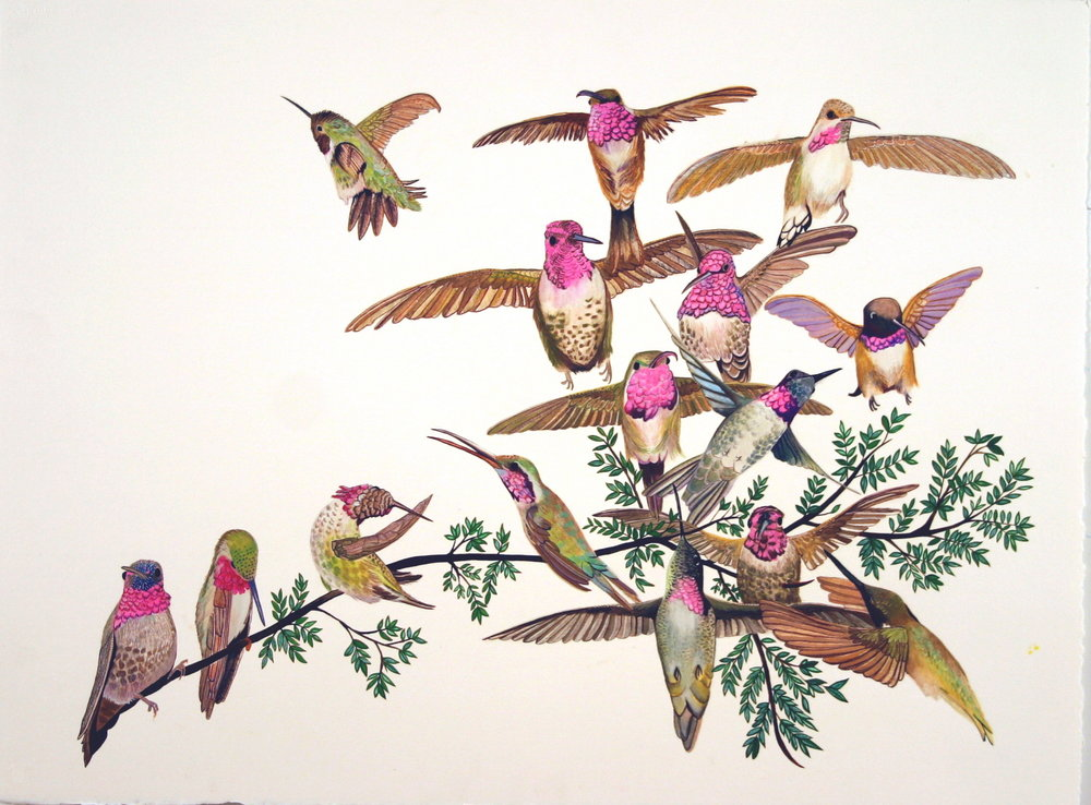 Hummingbirds 2007