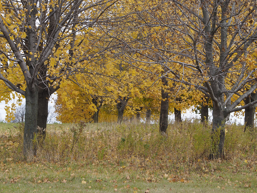 Waterloo county landscape photo by Susan Arness