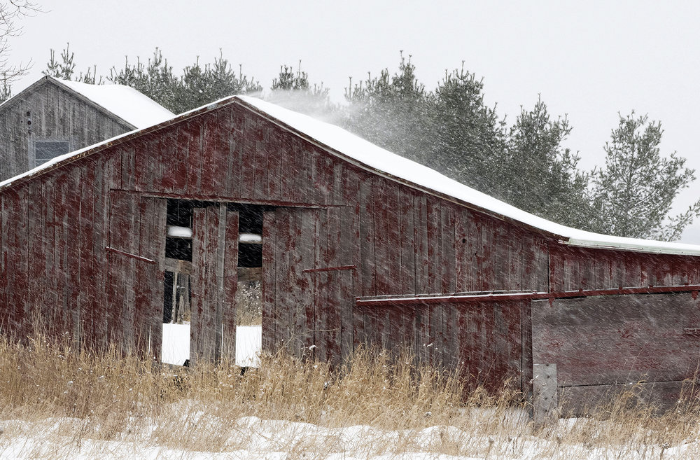 snowy barn in Wellington County Ontario