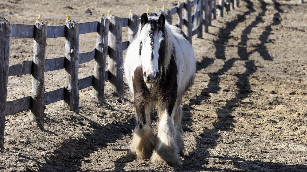 Susan Arness Photography -horse and fence.JPG