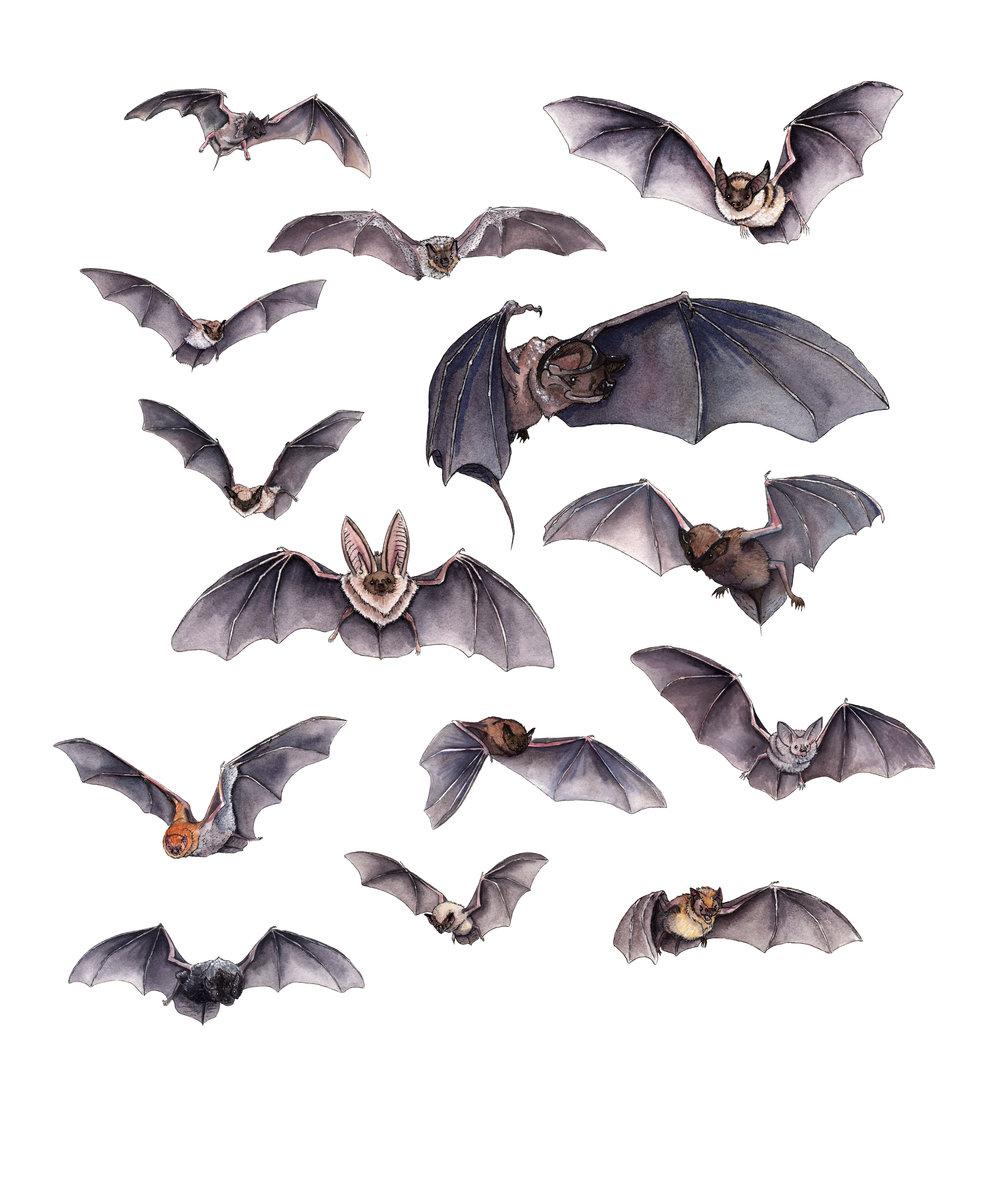 A Cloud of Northern California Bats