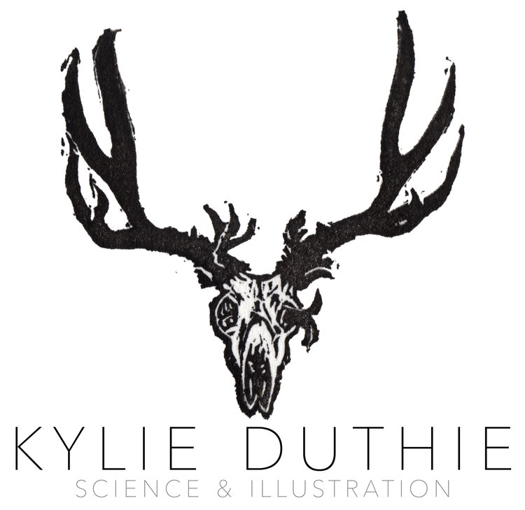 Kylie Duthie :: Science & Illustration