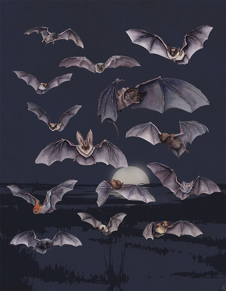 A Cloud of Northern California Bats