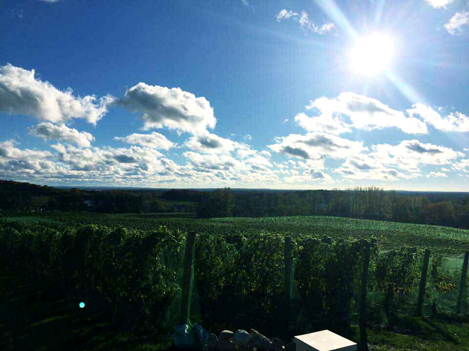Beautiful View from Rove Estate