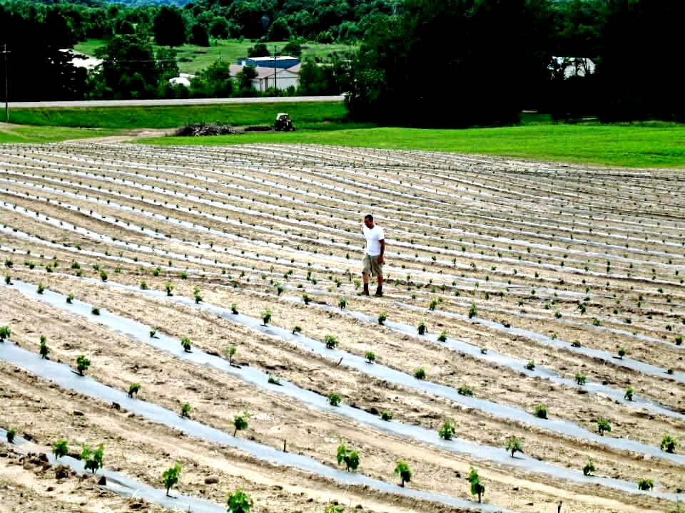 Rove Estate Farm Life