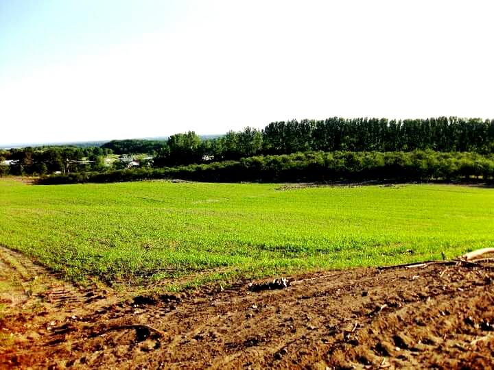 Rove Estate Leelanau County