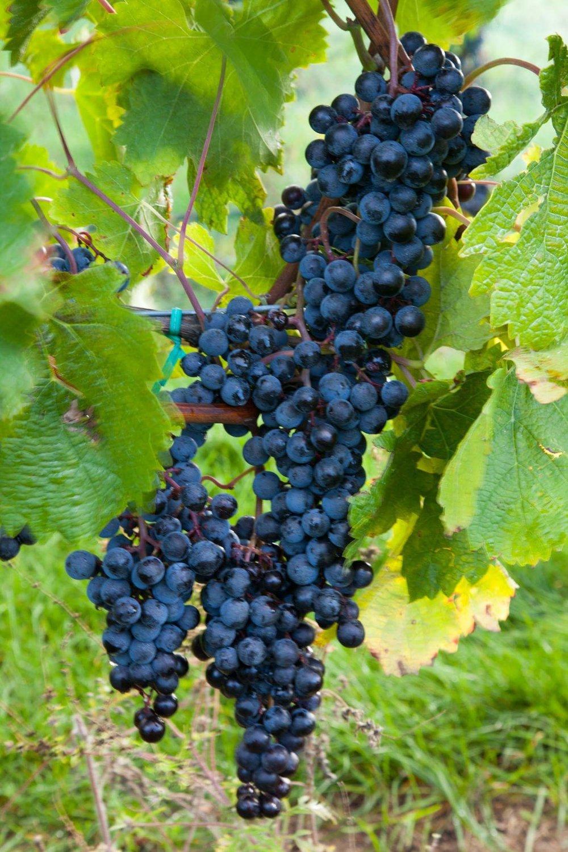Rove Estate Wine