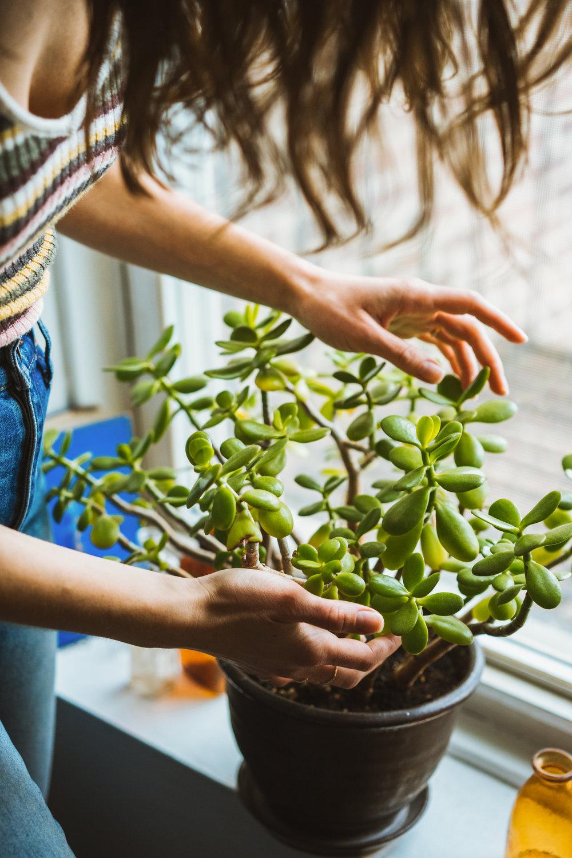 Michelle McSwain Photography Lifestyle Plants