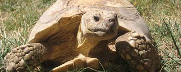 Kevin the tortoise.jpg